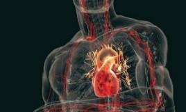 La Variabilidad Frecuencia Cardiaca